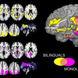 バイリンガルの脳はモノリンガル脳と異なる、大事なのはダブルスタンダード【情熱のバイリンガル子育て】ネィテイブばりにしてやった