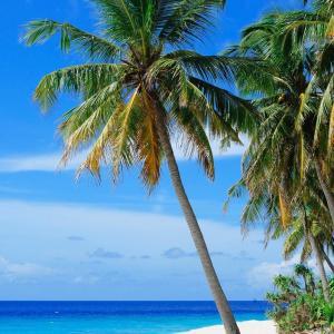 カリブ海の島での 思い出の味