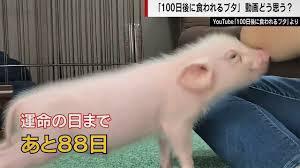 『100日後に食われる豚』は情報商材屋さんの案件だった…