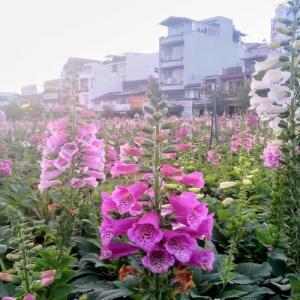 ダラットの花まとめ~開花時期と花が見れるスポットや観光地を紹介~