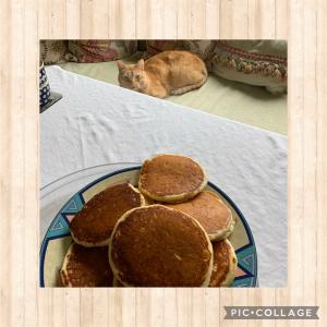 パンケーキと猫