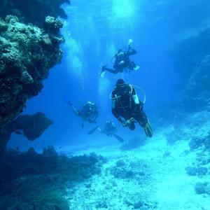 伊豆でダイビングを体験するなら『大瀬館マリンサービス』がオススメです!