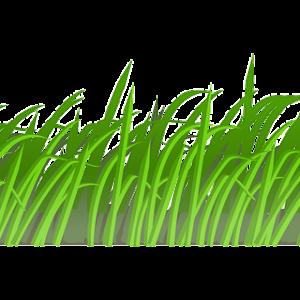 芝生に除草剤?へーすごいんだ。