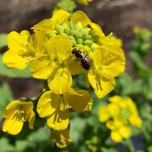 【家庭菜園初心者】収穫できなかった野菜達の花が咲いたよ