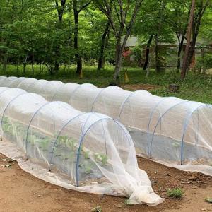2021年春!野菜作りのための畝を開墾【家庭菜園初心者】