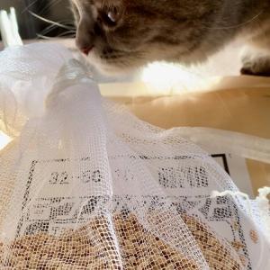 【自宅で米作り】田んぼじゃなくても米が作れるのか素人が試してみた!