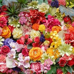【花のある暮らし】切り花を買うベストなタイミングとお気に入りの花屋さんが見つかるまで