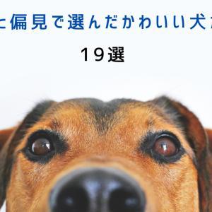 【かわいい】独断と偏見で選んだかわいい犬たち!19選【世界のわんこ】