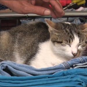 【日本人?】トルコで子猫を殺して食べた日本人が拘束され、国外退去処分へ👤ネットの反応=「意味が分からないし母猫が可哀想」「中国南部、ベトナム北部、韓国、ペルー、イギリス、スイスの限られた地域では猫食文化はあるみたい」「◯◯系日本人とかかな?」