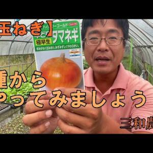 【超ハックニュース】【玉ねぎ】節約術!種から栽培しましょう!玉ねぎの苗は高いです・・。NO351 出典: 三和農園