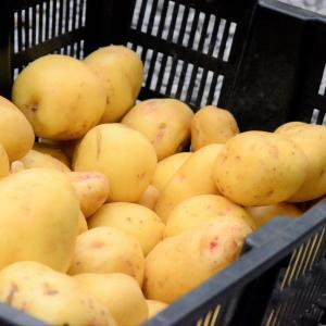 Harvest result of potato digging