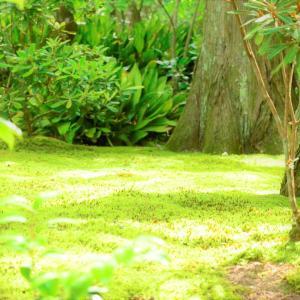 Forest in June 2021 shining in fresh green
