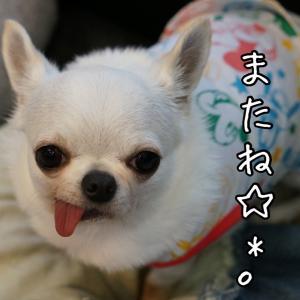 テンションMAXなちょび☆*°