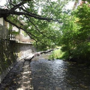再び源兵衛川のせせらぎから、清澄緑地へ