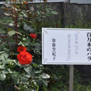島田市ばらの丘公園~ミス島田