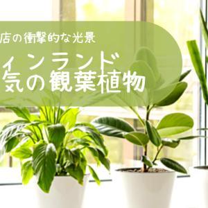 【フィンランドで人気の観葉植物】園芸店に行ったら衝撃の光景だった。