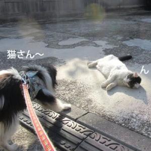 猫さんと僕