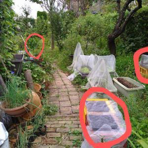 自宅の庭の台風準備