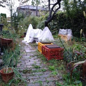 寒いけど庭ウロしました