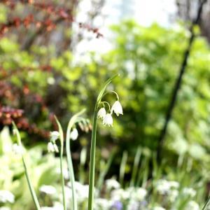 【BSテレ東】この庭、きゅんです 今日18:54