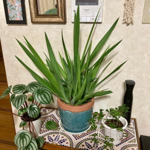 観葉植物を屋外で育てたら・・・