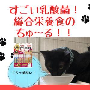 【猫の総合栄養食】すごい乳酸菌ちゅ~るがあるよ!!
