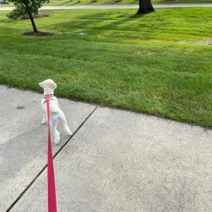 お散歩に行く楽しさが分かってきた