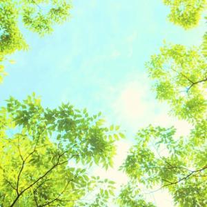 緑色の効果を観葉植物から得よう!おすすめ鉢植え4選