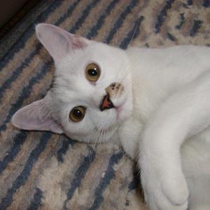 「コロナウイルスに気を付けて!」天国にいる愛猫「との」より。。。