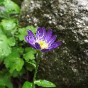 静かな雨に濡れて咲く花