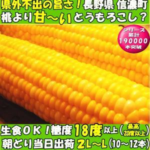恵味 長野産 生トウモロコシ 2L~L サイズ 10~12本