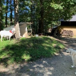 ワンコと一緒♪癒しの空間で牧場のランチを食す♪(那須 森林ノ牧場)