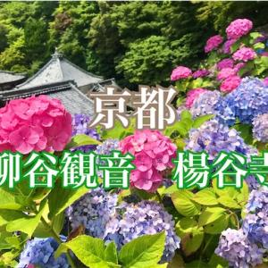 【京都】柳谷観音 楊谷寺のあじさいウィーク2021へ!花手水や駐車場情報など
