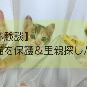 【体験談】子猫を保護&里親を探した話