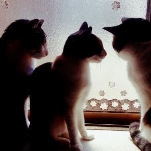 逆光の3匹