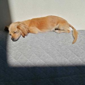 ミックス犬日記:暑くて人間が死にそうなんだ