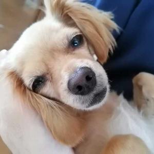 ミックス犬日記:うちの犬、もしかして寝すぎ?(大丈夫だ問題ない)