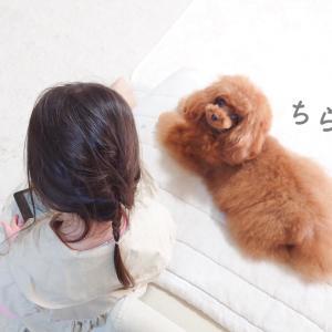 子守り犬の顔と素顔と♪どちらも、もっちゃん♪
