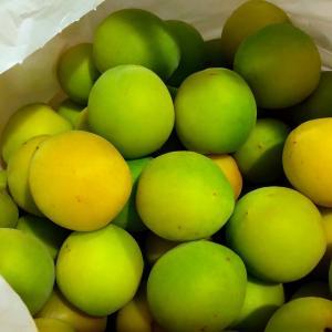 大量の「梅の実」が何になったかというと。