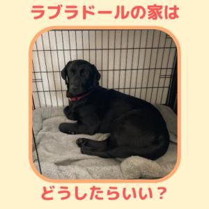ラブラドール(大型犬)の家【ケージ ・クレート・サークル】どれがいい?選ぶポイントは?大型犬の住空間づくり。ラム家はこんな感じでした。