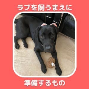 ラブラドール(大型犬)を飼う前に何を準備する?わんこお迎え時、迎えた当日から必要なもの。