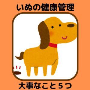 ずっと元気でいてほしい!【犬の健康管理】毎日気を付けてあげたいこと5つ