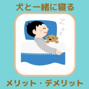 犬と一緒に寝るのは幸せ?やめるべき?犬と同じベッドで寝るメリット・デメリット