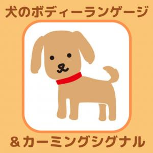 【ラブラドール・大型犬】しつけにも役立つ犬のボディーランゲージ&カーミング。シグナル。犬の気持ちを知ろう!