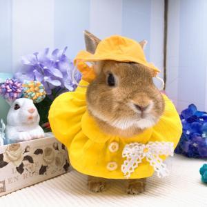 黄色かわいい(♡ε♡)