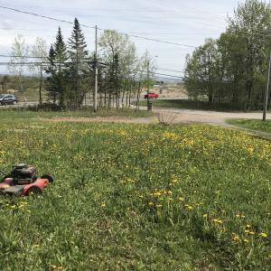 カナダ流の芝刈りをした話!