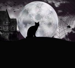 【研究】暗闇に恐怖を感じる脳内メカニズムが明らかに 光が扁桃体の活動を抑制⁉