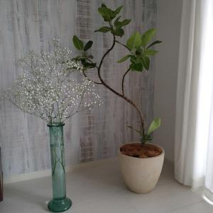 うちにきてくれたお洒落なゴムの木と可愛いカスミ草