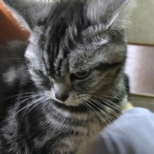 父の愛した猫