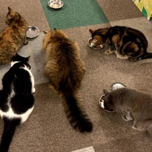 おひとりさま、猫カフェにいく